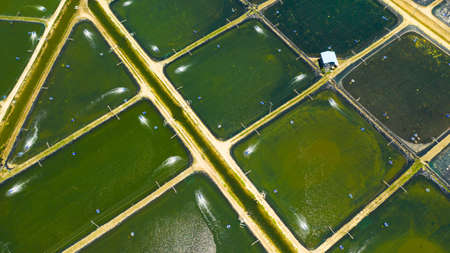 Shrimp farm with ponds and aerator pump, top view. Bohol, Philippines. The growing aquaculture business continuously threatening the nearby wetlands. Standard-Bild