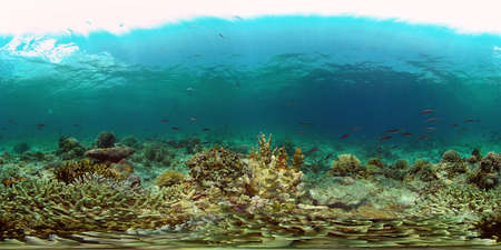 Tropical fishes and coral reef underwater. Hard and soft corals, underwater landscape. Philippines. Virtual Reality 360.