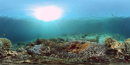 Underwater fish reef marine. Tropical colourful underwater seascape. Philippines. Virtual Reality 360. Stock fotó