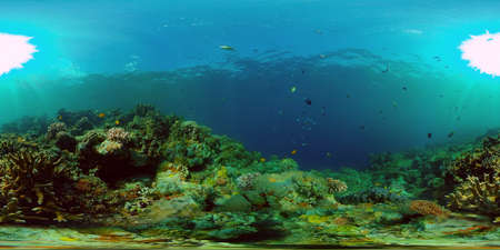 Coral garden seascape and underwater world. Colorful tropical coral reefs. Life coral reef. Philippines. 360 panorama VR Standard-Bild