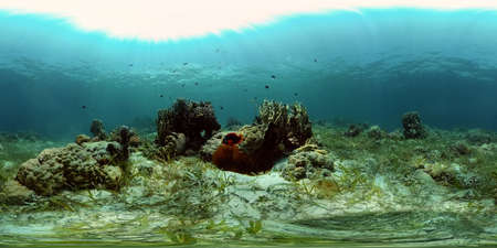 The underwater world of coral reef with fishes at diving. Coral garden under water. Coral Reef Fish Scene. Philippines. 360 panorama VR Standard-Bild