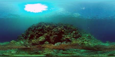 Tropical Fish Corals Marine Reef. Underwater Sea Tropical Life. Tropical underwater sea fishes. Underwater fish reef marine. Tropical colorful underwater seascape. Philippines. 360 panorama VR