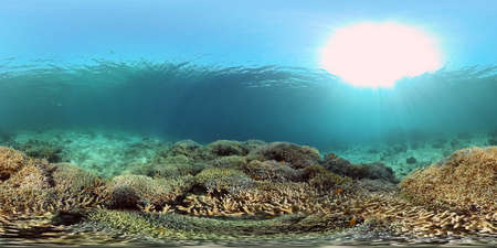 Beautiful underwater landscape with tropical fish and corals. Philippines. 360 panorama VR Standard-Bild