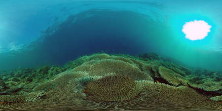 Underwater Colorful Tropical Fishes. wonderful and beautiful underwater colorful fishes and corals in the tropical reef. Philippines. 360 panorama VR