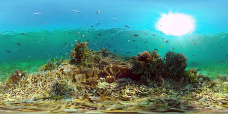 Tropical colourful underwater seascape.The underwater world with colored fish and a coral reef. Philippines. 360 panorama VR Standard-Bild