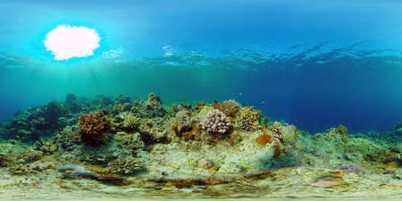 Tropical fishes and coral reef at diving. Underwater world with corals and tropical fishes. Virtual Reality 360. Standard-Bild