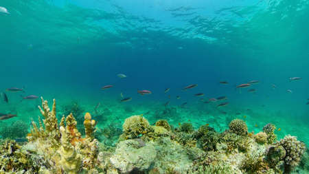 Underwater Scene Coral Reef. Underwater sea fish. Tropical reef marine. Colourful underwater seascape. Philippines. Standard-Bild