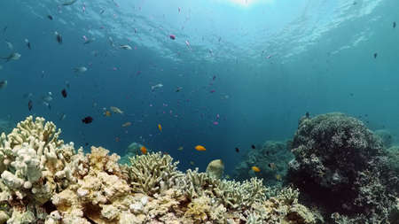 Coral reef underwater with fishes and marine life. Coral reef and tropical fish. Stok Fotoğraf - 168137994