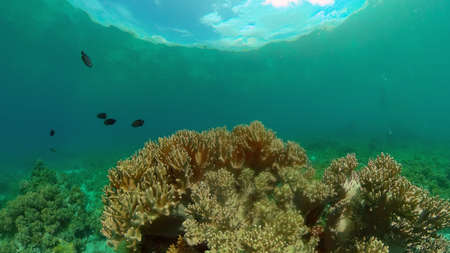 Colourful tropical coral reef. Hard and soft corals, underwater landscape. Philippines. Standard-Bild