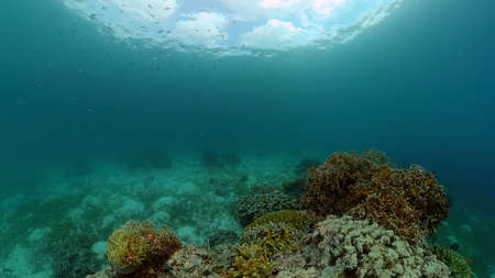 Tropical coral reef seascape with fishes, hard and soft corals. Underwater video. Philippines.