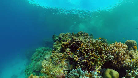Coral Reef Fish Scene. Tropical underwater sea fish. Colourful tropical coral reef. Philippines. Stok Fotoğraf - 168138002