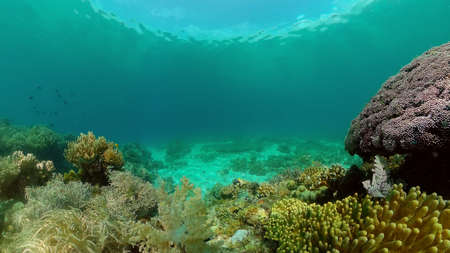 Colorful tropical coral reef. Hard and soft corals, underwater landscape. Travel vacation concept. Philippines. Standard-Bild