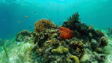 Tropical coral reef. Underwater fishes and corals. Philippines. Standard-Bild