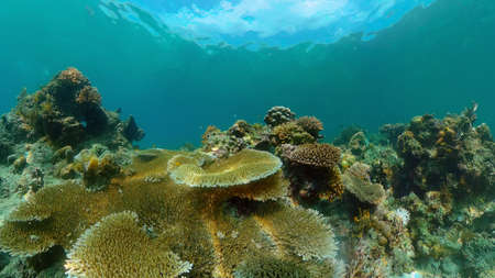 Underwater fish reef marine. Tropical colourful underwater seascape. Philippines. Stock fotó
