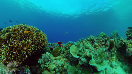 Tropical Underwater Colorful Reef. Tropical underwater sea fish. Philippines. Stock fotó