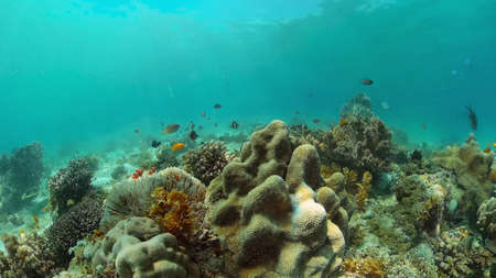 Tropical fishes and coral reef at diving. Underwater world with corals and tropical fishes. Standard-Bild