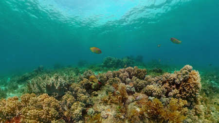 Beautiful underwater world with coral reef and tropical fishes. Philippines. Travel vacation concept Stock fotó