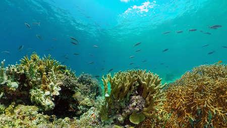 Underwater fish garden reef. Reef coral scene. Seascape under water. Philippines.