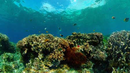 Tropical Fish Corals Marine Reef. Underwater Sea Tropical Life. Tropical underwater sea fishes. Underwater fish reef marine. Tropical colorful underwater seascape. Philippines.