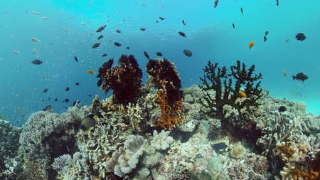 Beautiful underwater landscape with tropical fish and corals. Philippines.