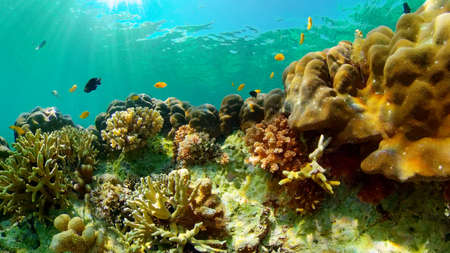 Underwater Tropical Reef View. Tropical fish reef marine. Soft-hard corals seascape. Philippines. Stok Fotoğraf - 168138032