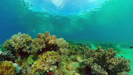 Tropical colourful underwater seascape.The underwater world with colored fish and a coral reef. Philippines. Standard-Bild