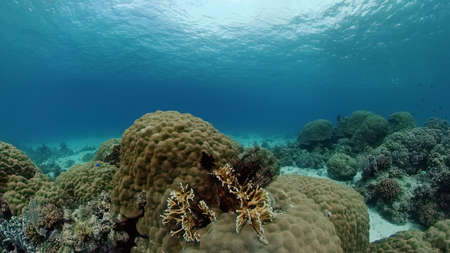 Tropical fishes and coral reef underwater. Hard and soft corals, underwater landscape. Philippines. Standard-Bild