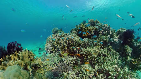 The Underwater World of the with Colored Fish and a Coral Reef. Tropical reef marine. Philippines. Standard-Bild