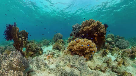 Underwater world with coral reef and tropical fishes. Travel vacation concept