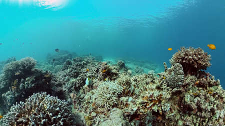 Reef Marine Underwater Scene. Tropical underwater sea fish. Philippines. Standard-Bild