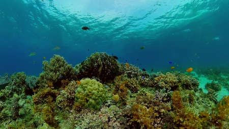 Tropical fishes and coral reef underwater. Hard and soft corals, underwater landscape.