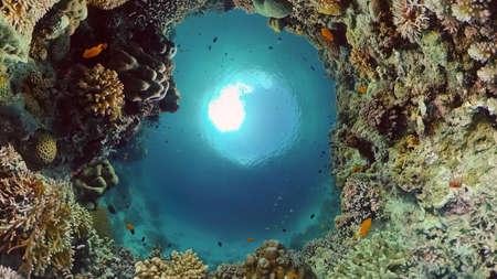 Underwater fish reef marine. Tropical colourful underwater seascape. Philippines. Standard-Bild