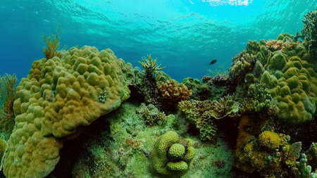 Coral reef and tropical fishes. The underwater world of the Philippines. Stok Fotoğraf - 168138046
