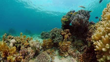 Underwater Scene Coral Reef. Tropical underwater sea fishes. Philippines. Standard-Bild
