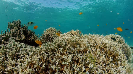 Beautiful underwater world with coral reef and tropical fishes. Philippines. Travel vacation concept Standard-Bild