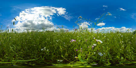 Rustic landscape with meadow and tall grass on a Sunny day. Field and grass under a blue sky with clouds. VR 360.