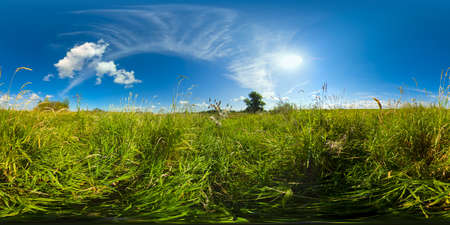 Meadows with green grass and flowers on a Sunny summer day. Field in the countryside. Summer landscape. VR 360. Standard-Bild