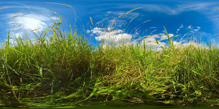 Summer landscape: Field with green grass and wildflowers on a Sunny summer day. VR 360. Standard-Bild