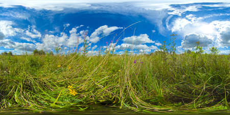 Green meadow, field on a Sunny summer day.Field of grass on a background of sky and clouds. Rural landscape. VR 360. Standard-Bild