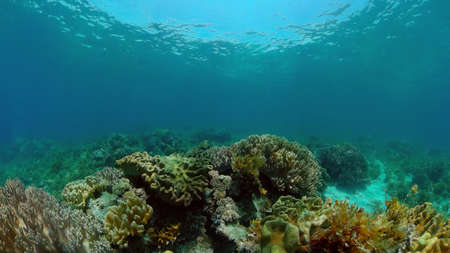 Tropical sea and coral reef. Underwater Fish and Coral Garden. Underwater sea fish. Tropical reef marine. Colourful underwater seascape. Philippines.
