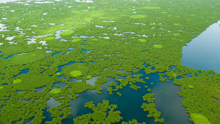 The surface of the lake with mangroves. Lake Baloi, Mindanao, Philippines. Top view of Tropical landscape with mangrove forest. Stok Fotoğraf