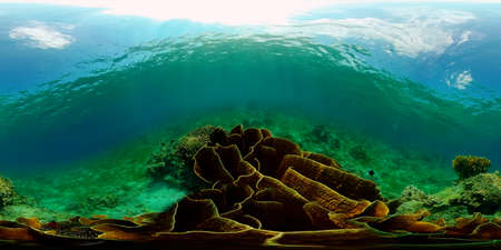 Tropical coral reef seascape with fishes, hard and soft corals. Underwater video. Philippines. 360 panorama VR Stok Fotoğraf