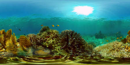 Blue Sea Water and Tropical Fish. Tropical underwater sea fish. Philippines. Virtual Reality 360.