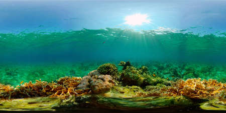 Sealife, Diving near a coral reef. Beautiful colorful tropical fish on the lively coral reefs underwater. Philippines. 360 panorama VR