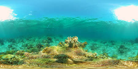 Colourful tropical coral reef. Hard and soft corals, underwater landscape. Philippines. Virtual Reality 360.