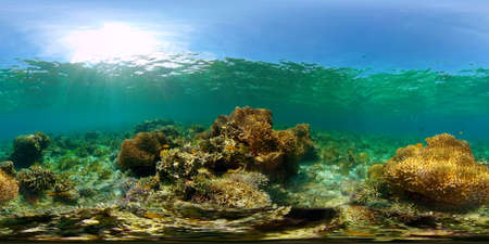 Tropical Fishes on Coral Reef, underwater scene. Colourful tropical coral reef. Scene reef. Philippines. 360 panorama VR