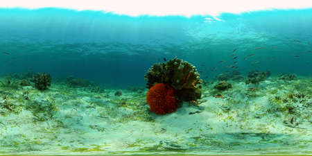 Underwater world with coral reef and tropical fishes. Travel vacation concept 360 panorama VR Stok Fotoğraf