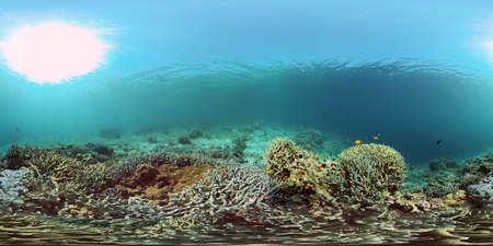 Colourful tropical coral reef. Scene reef. Marine life sea world. Philippines. 360 panorama VR