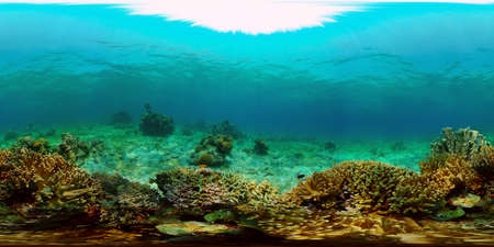 Tropical coral reef. Scene reef. Marine life sea world. Underwater fish reef marine. Philippines. Virtual Reality 360. Stok Fotoğraf