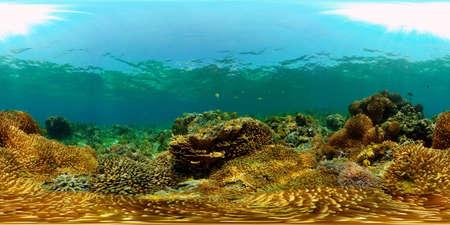 Underwater Scene Coral Reef. Coral Reefs Seascape. Underwater sea fish. Tropical fish reef marine. Philippines. Virtual Reality 360. Stok Fotoğraf